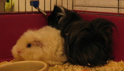 http://www.yggdrasils.de/Bilder/Schweine/009.JPG
